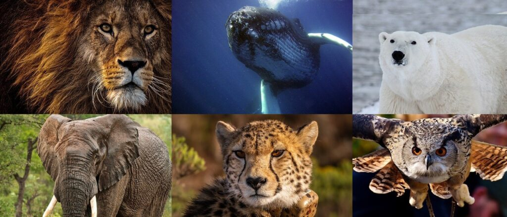 野生の動物たち