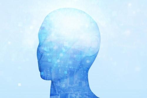 人の脳のイメージ図
