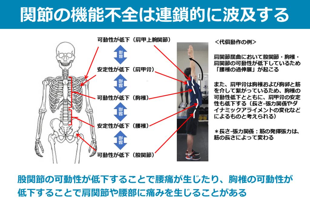 肩関節の機能不全は連鎖的に波及する
